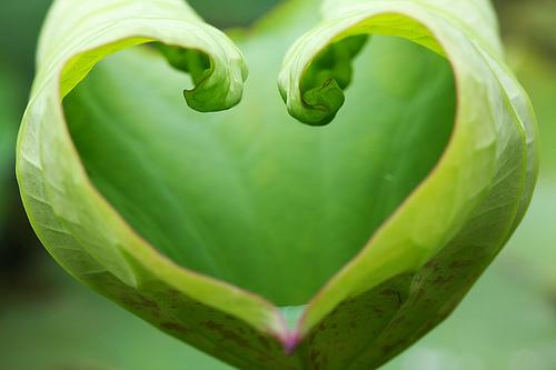 verde corazon