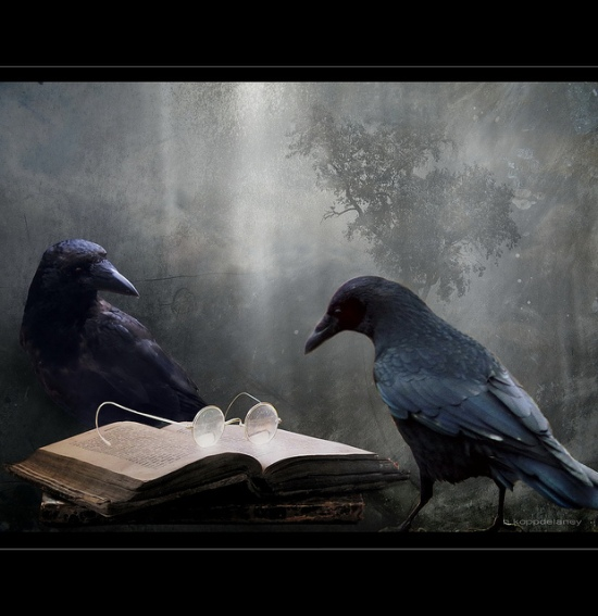 crows reading